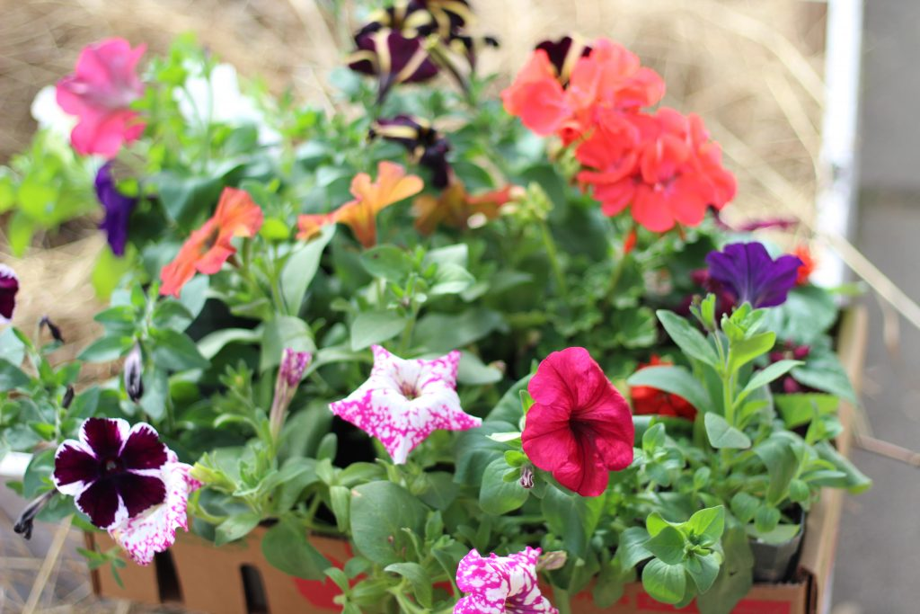 many different flowers in tray